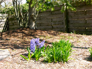 Protect and beautify beds with a layer of mulch.