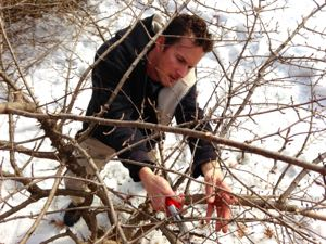 Winter is the ideal time for most pruning.